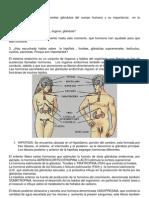 1. Sistema Endocrino