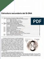 0-1tema 5 Estructura Secundaria Del B-dna