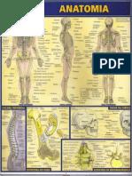 Resumão - Anatomia
