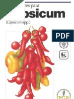 Descriptores Capsicum IPGRI