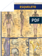 Resumão -  Esqueleto Humano