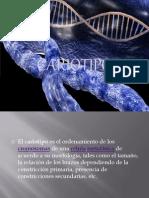 cariotipo-100513115819-phpapp01