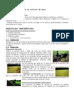 Control de plagas en el cultivo de maíz