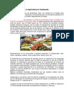 La Agricultura en Guatemala Si
