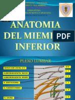 Anatomia Miembro Inferior - 2009