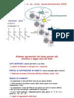 2. Struttura fisica del DNA. Flessibilità strutturale e problema topologico. Le DNA topoisomerasi