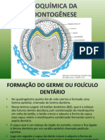 BIOQUÍMICA DA ODONTOGÊNESE TRABALHO SÉRIO (2)