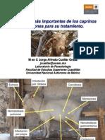 Parasitosis de Caprinos y Tratamiento