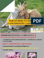 4- PROGAN PTb, LC, QC y fotosensibilización ovinos y caprinos