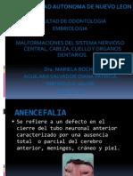 Labio Leporino Y Paladar Hendido Embriologia Pdf