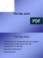 The Hip Joint