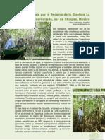 Un viaje por la Reserva de la Biosfera La Encrucijada, sur de Chiapas, México