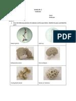 Phylum Cnidaria Worksheet