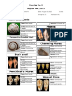 Mollusca Worksheet Part 1