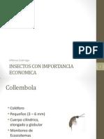 Insectos de Importancia Economica