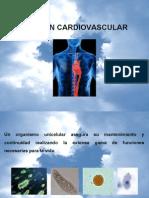 Función cardiaca 1