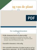 Voeding Van de Plant