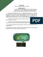 Practica Plasmidos