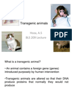 transgenicanimals-110703092227-phpapp01 (1)