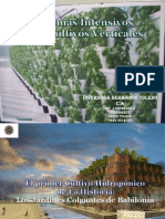 Sistema Vertical de Cultivos Diapositivas