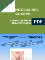 GLÁNDULAS CLASE HORMONAS