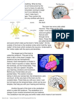 brain summary pdf