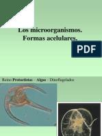 Microorg1