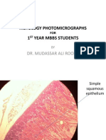 Histology Photomicrographs for 1st Year Mbbs Students by Dr Roomi. Pics