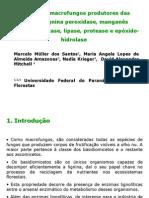 Seleccion de Macrofungos Productores de Enzimas, Ligninas Peroxidasa, Manganeso Peroxidasa, Lacase, Lipase, Protease e Epoxido-hidrolase