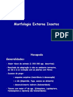 Morfologia Externa de Insetos