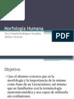 Introducción a la Morfología Humana