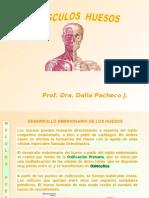 Morfología Músculos y Huesos