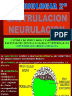 embriologia-2-2008