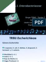 Tribus enterobacterias