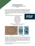 Coccidiosis en Caninos y Felinos. Por MVZ. Javier García de la PeñaPor