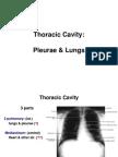 Pleurae Lungs E-learning