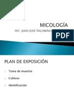 Exposicion Micologia