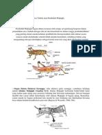 sistemekskresi hewan