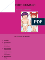 elcuerpohumano-100512150814-phpapp02
