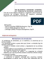 Tema 14.  Metabolismo aminoácidos. Catabolismo. 1ªparte