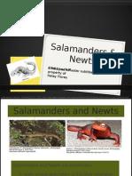PP Salamander and Newts