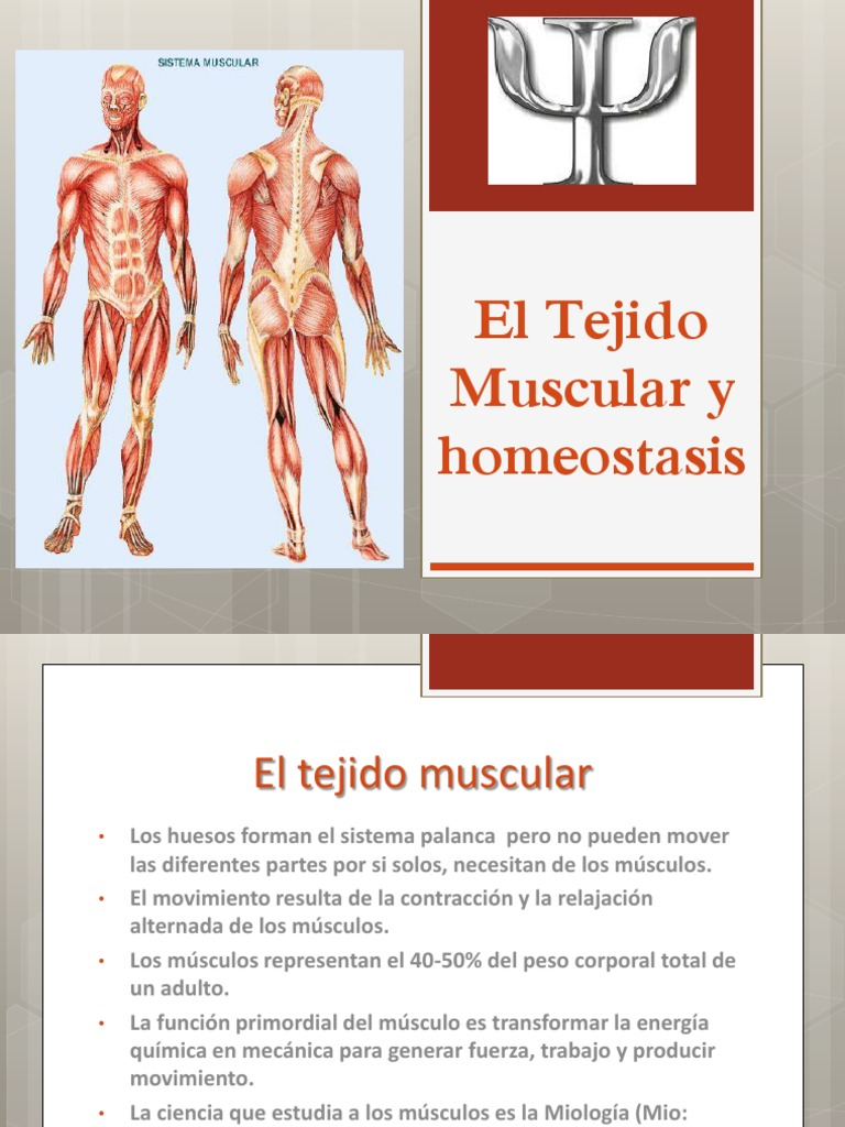 El Tejido Muscular y Homeostasis (2)
