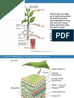 Plant Anatomi