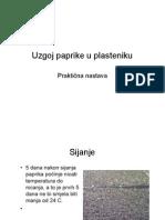 Uzgoj Paprike u Plasteniku