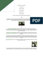 Nombre común Oso panda