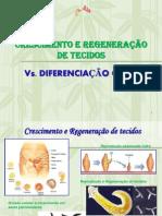 Crescimento-e-Regeneração-de-Tecidos-vs.-Diferenciação-Celular