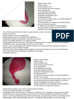 Infecto II - Prática 1º bimestre