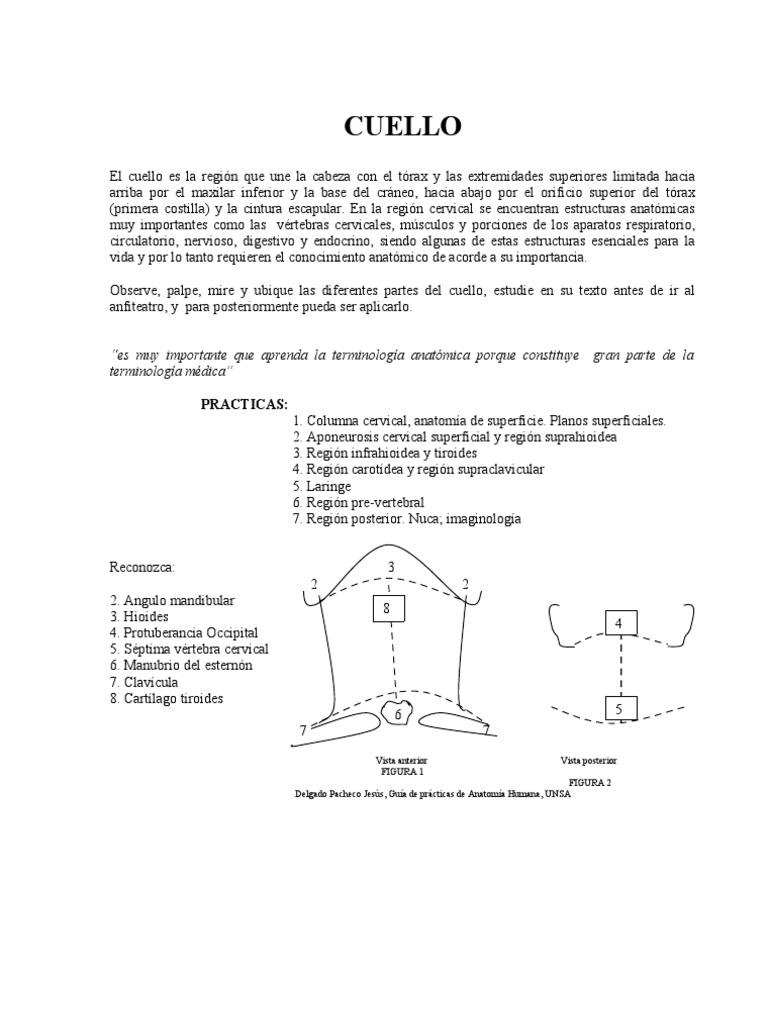 Excepcional Anatomía Región Submandibular Colección - Imágenes de ...
