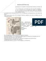 Anatomia de Pancreas.
