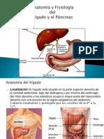Presentacion Del Higado y El Pancreas